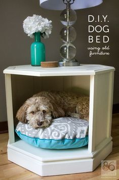 Diy Crafts Ideas : 24 Creative DIY Ideas For Pet Beds And Feeders