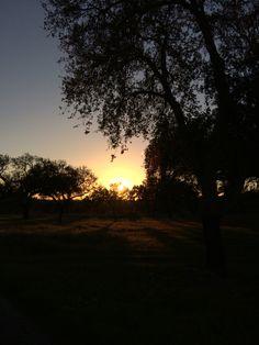 O por do sol no Alentejo. In Refugio das Origens - Rural Tourism Alentejo