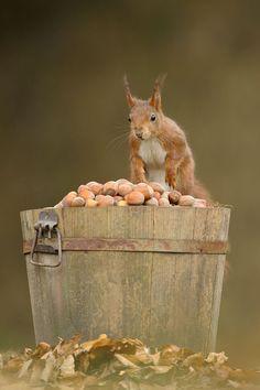 jackpot of acorns