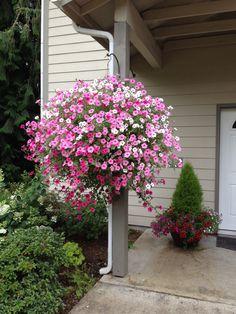 Petunias!!! Garden Inspiration, Garden Ideas, Petunia Flower, Flower Containers, Outside Living, Hanging Baskets, Petunias, Dream Garden, Container Gardening