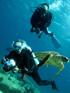 Divers & A Turtle …