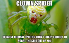 Clown Spider Memes. Best Collection of Funny Clown Spider Pictures
