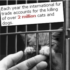 Animal cruelty facts. We are a flourishing and dominant race but yet, some cater to their cheap thrills through thoughtless cruel acts against animals. There prevails a perennial disregard for animals today and they are being poached and slaughtered relentlessly. Fur clothing immensely delights certain....