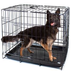 Folding Metal Pet Crate with Removable Liner by Weebo Pets *** Insider's special review you can't miss. Read more  : Dog kennels