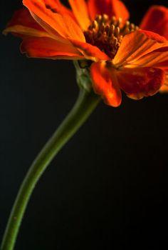 'Feuriges Orange' von Heidrun Lutz bei artflakes.com als Poster oder Kunstdruck $16.63 #Zinie