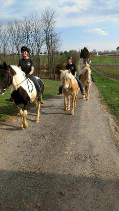 Gentle Giant Horse Rescue