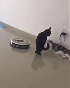 Cats - click visit to see more cleaning cats pets fenny humor robotcleaner Funny Animal Videos, Cute Funny Animals, Funny Animal Pictures, Animal Memes, Cute Baby Animals, Funny Cute, Animals And Pets, Animal Humor, Hilarious