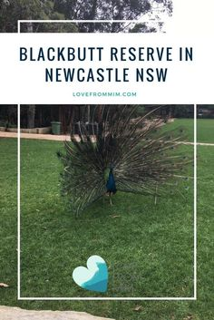 Blackbutt Reserve in Newcastle - a great family friendly day out for kids in Newcastle NSW