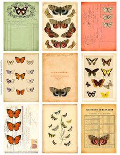 Ephemeras Vintage Garden: Free Weekly Printable: Butterfly Ephemera ATCs