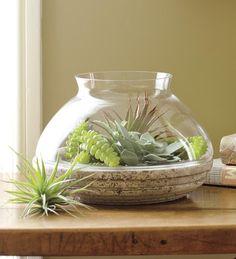Glass And Resin Terrarium