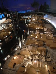 Fukui Prefectural Dinosaur Museum. by hiromori, via Flickr Exhibition Display, Museum Exhibition, Museum Lighting, Dinosaur Museum, Design Museum, Exhibit Design, Museum Architecture, Museum Displays, Natural History Museum