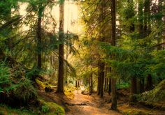 Woodland path that runs alongside Puck's Glen and is part of a circular route through the Argyll Forest Park (Scotland) by Bathsheba1