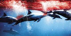 mattanza dei delfini,manifestazione di protesta di fronte all'ambasciata del Giappone