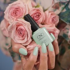 Begin your spring fling with the new CND English Garden collection. Discover romance in a garden of soft and delicate spring nail colors. Available in signature CND Vinylux nail polish and CND Shellac gel polish. Cnd Shellac Colors Winter, Spring Nail Colors, Spring Nails, Gel Shellac Nails, Manicures, Mint Nail Polish, Nail Color Trends, Nail Colour, Cnd Vinylux