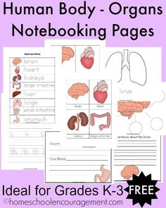 Teaching the human body in your homeschool? Do you notebook? Try these free printables created for ages K-3rd grade.