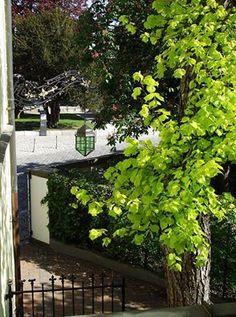 Hotel Platengarten #Fahrradtouren durch #Ansbach Die Fahrrad-Saison hat wieder begonnen, die #Radtouren durch das #Altmühltal und entlang der #romantischenstrasse sind sehr beliebt und bei schönem Wetter auch für eine spontane Tour geeignet. Wenn sie die lange Tour von Rothenburg ob der Tauber nach Kelheim an der Donau planen, lassen Sie es uns wissen. Für die Fahrräder unserer Hotelgäste, haben wir in unserem abgeschlossenen Garten genügend Platz zum Abstellen. doors gate iron