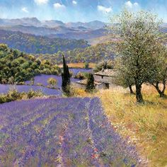 Lavender fields in the Luberon between Mont Ventoux and the Durance ...