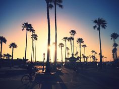 Newport beach - The OC - California - Palm Trees   © Elisa Kasikci