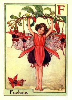 Fuchsia Flower Fairy Vintage Print, Cicely Mary Barker « The Flower Fairy Shop