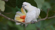 Philippines: power plant threatens rare cockatoos (petition)