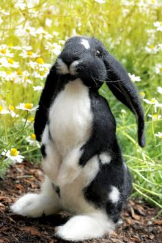Needle felted black and white, Dutch Lop Ear Bunny, soft sculpture