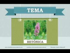 Beneficios, nutrientes y propiedades de la betónica. Más información en: remediocaseronatural.com/comidas-sanas-beneficios-betonica.htm