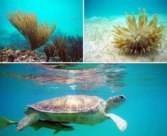 Best Things to Do in Yucatan Peninsula Akumal