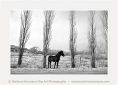 """A Winter Morning"" - Black and White Fine Art Photography by South African Master Photographer Marlene Neumann - www.marleneneumann.com - E-mail: neumann@worldonline.co.za Can You Feel It, How Are You Feeling, Free State, New Image, Fine Art Photography, Moose Art, Photographs, African, Angel"