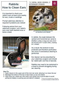 How to clean rabbit's ears
