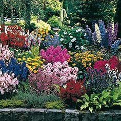 jumbo sun perennial grab bag from springhillgreat for beginning gardeners - Flower Garden Ideas Illinois