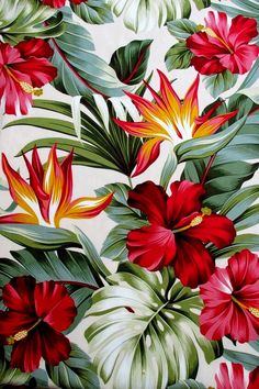 Fabric, Red Hibiscus Floral on Cream, Tropical Hawaii, Bird of Paradise Flower, By The Yard - wallpaper - Motif Tropical, Tropical Art, Tropical Leaves, Tropical Flowers, Tropical Pattern, Hawaiian Flowers, Hawaii Pattern, Estilo Tropical, Tropical Prints