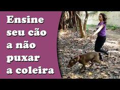 Como evitar que o cachorro puxe a coleira | Tudo Sobre Cachorros