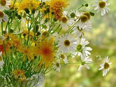 Shades Of Yellow, Mellow Yellow, Places To Visit, Herbs, Medicine, Plant, Herb, Spice