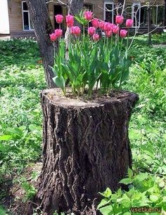 "Tulip bulbs planted in the hollow of a tree stump. ""I think this page is in Russian, but there are a number of nifty garden art photos here"". Garden Inspiration, Plants, Tree Stump Planter, Garden Decor, Backyard Garden, Flower Planters, Recycled Garden, Backyard Decor, Planting Bulbs"