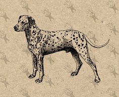 Vintage Image Dalmatian Dog Breed Instant Download Digital printable clipart graphic Transfer On Paper Burlap Pillows Totes Towels HQ 300dpi by UnoPrint on Etsy