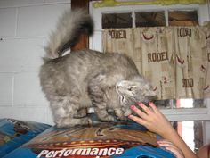 Cat Training: Feral Cats. Personally I like the Trucatch traps but bottom line get your ferals spayed and neutered and vaccinated!