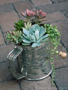 Vintage flour sifter as a container for plants.