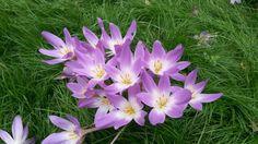 Beautiful flowers in Kew Gardens
