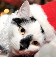 My cat Dottie. Pat, Key West, Florida. 12/20/12.
