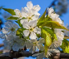 Wiled flowers!  The beauty of spring  by Florin Design on 500px.
