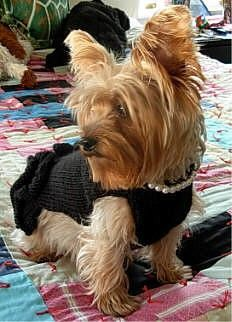 The FAMOUS Little Black Dress With Pearls DOG by mysavannahcottage, $35.00