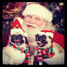 Santa Pugs