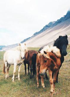 Iceland Travel Journal // Akureyri // Shannon Kirsten Photography