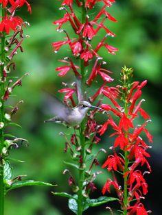 Pennsylvania Native Plant Society Www Pawildflower Org