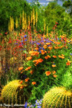 The Desert Bloom, Arizona