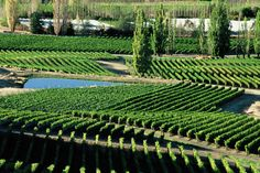 Felton Road's vineyards are managed by organic and biodynamic regimes, and are fully certified by Demeter. Felton Road is in Bannockburn, Central Otago (South Island), New Zealand.