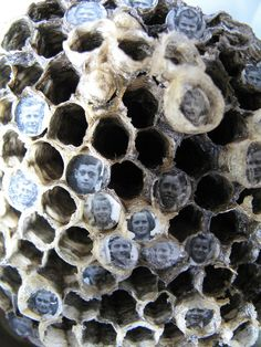 Lisa Wood, wasp nest family - nature & man's connection