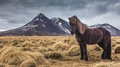 Islande 2015 - Iceland - Richard Pittet - photography