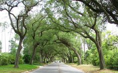 Pensacola, Florida (12th Avenue). Does not do this justice.  I go through the tunnel of trees and feel like i am in a different time!