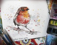 Original watercolor bird art. Robin Red Breast. water colour art by Sillier Than Sally. Prints available. www.sillierthansally.com